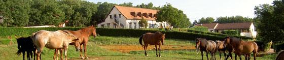 Les-Garennes-chevaux